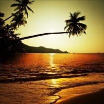 Stickers muraux déco : palmiers coucher de soleil