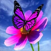 Stickers muraux déco : papillon