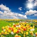 Stickers muraux déco : champ de fleurs