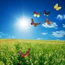 Stickers muraux déco : champ de fleurs papillons