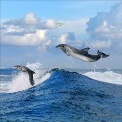 Stickers muraux déco : dauphins