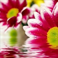 Stickers muraux déco : Fleurs