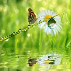 Stickers muraux déco : papillon lac
