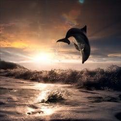 Stickers muraux déco : dauphin la nuit