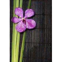 Stickers muraux déco : bambou orchidée