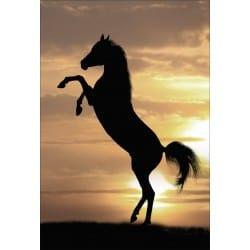 Stickers muraux déco : cheval debout