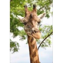 Stickers muraux déco : girafe