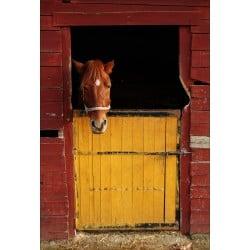 Stickers muraux déco : cheval dans son box