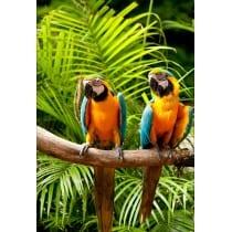 Stickers muraux déco : perroquets