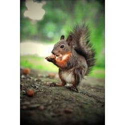 Stickers muraux déco : écureuil