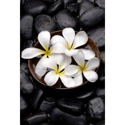 Stickers muraux déco : galets noirs fleurs