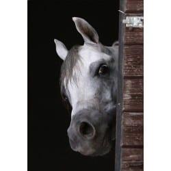 Stickers muraux déco : tête de cheval