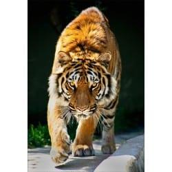 Stickers muraux déco : tigre
