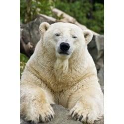 Stickers muraux déco : ours blanc