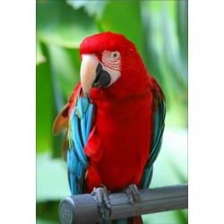 Stickers muraux déco : perroquet