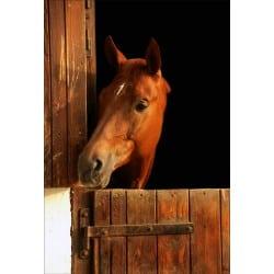 Stickers muraux déco : cheval dans son box tête à gauche
