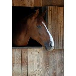 Stickers muraux déco : cheval dans son box tête à droite