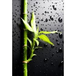 Stickers muraux déco : bambou