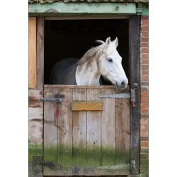 Stickers muraux déco : cheval blanc