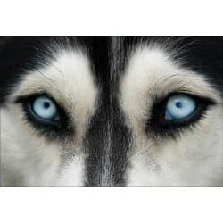 Stickers muraux déco : yeux de loup
