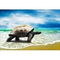 Stickers muraux déco : tortue géante