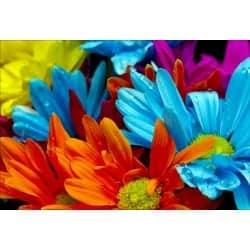 Stickers muraux déco : fleurs multicolores