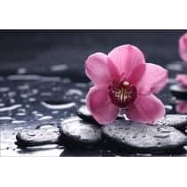 Stickers muraux déco : galets orchidée