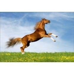 Stickers muraux déco : cheval qui saute