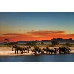Stickers muraux déco : paysage elephant