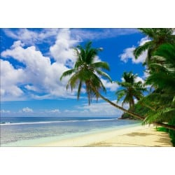 Stickers muraux déco : plage palmiers