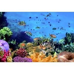 Stickers muraux déco : poissons tropicaux
