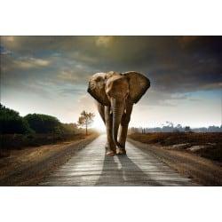 Stickers muraux déco : éléphant