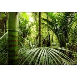 Stickers muraux déco: bambous