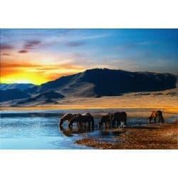 Stickers muraux déco: chevaux mer montagne