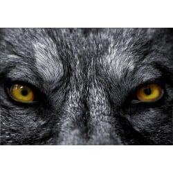Stickers muraux déco: loup