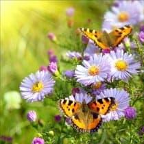 Stickers géant déco : fleurs papillons
