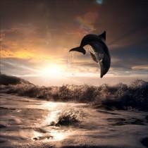 Stickers géant déco : dauphin la nuit