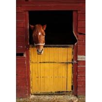 Stickers géant déco : cheval dans son box