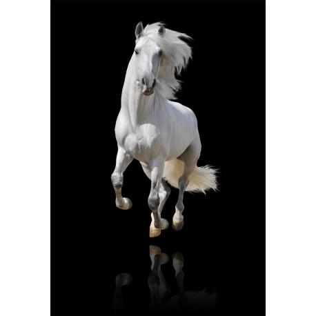 Stickers géant déco : cheval blanc