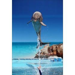 Stickers géant déco : dauphin