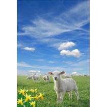 Stickers géant déco : agneau