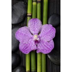 Stickers géant déco : bambou orchidée