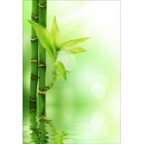 Stickers géant déco : bambou