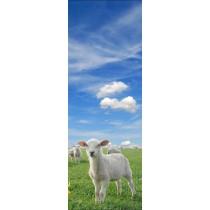 Papier peint porte déco - agneau