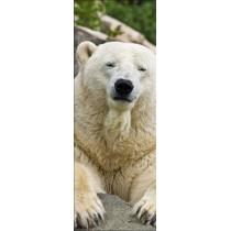 Papier peint porte déco - ours polaire
