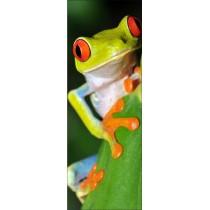 Papier peint porte déco - grenouille