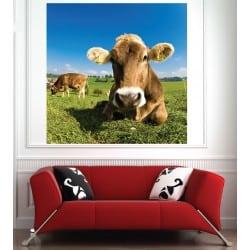 Affiche poster Vache 21090718