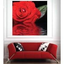 Affiche poster Rose