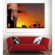 Affiche poster Eléphant