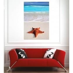 Affiche poster plage étoile de mer